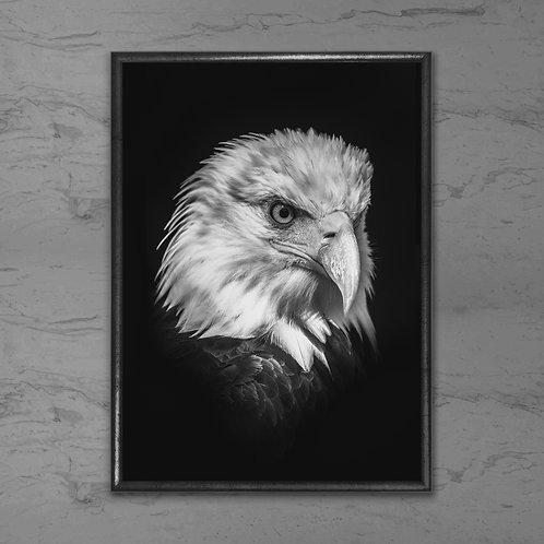 Ørnen - Plakat i sort-hvid