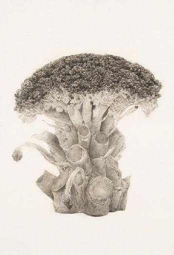 Broccoli trees-1, conte on Korean paper, 120x82, 2012