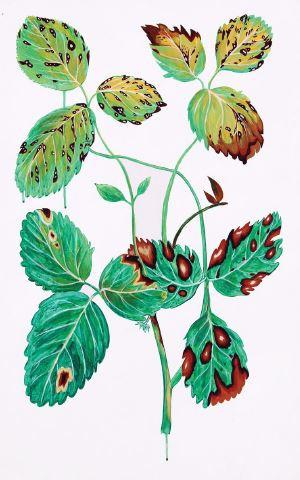 탄저병 걸린 딸기, 80x50cm, 캔버스 위에 아크릴 물감, 2015