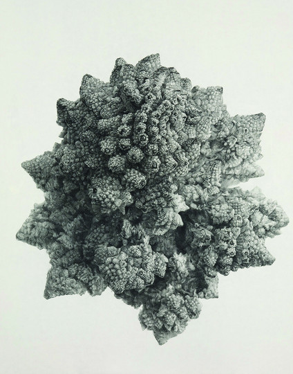 Broccoli land 3-1, conte on Korean paper, 165x130cm, 2011