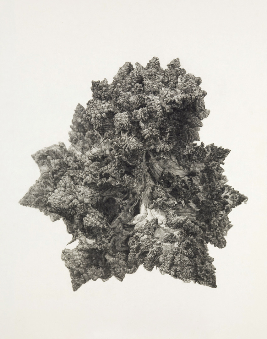 Broccoli land 3-2, conte on Korean paper, 165x130cm, 2011