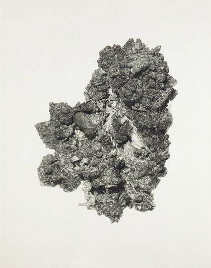 Broccoli land 3-3, conte on Korean paper, 165x130cm, 2011