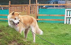 raedersdorff-educateur-canin-chien.jpg
