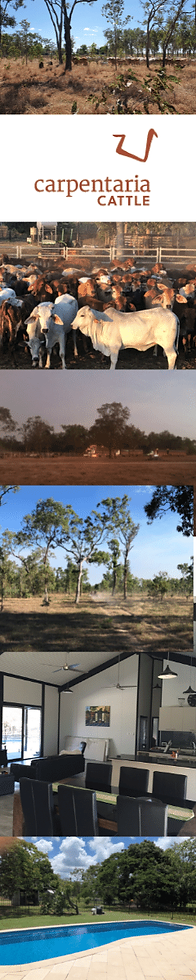 Carpentaria Cattle Co  SIDE IMAGE.png