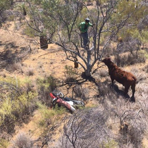 Charles Simpson, the chopper pilot who took this hum dinga, must have been having a good chuckle at the situation... taken at Benmarra Station in the Northern Territory