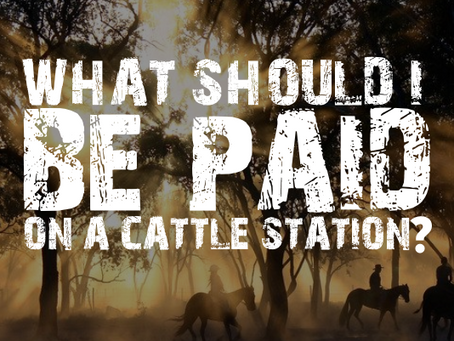 How much do you get paid on a cattle station?