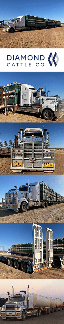Diamond Cattle Co _ SIDE IMAGE.png