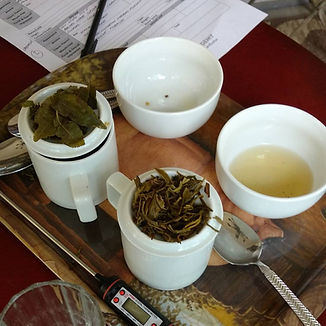 two sets of tea tasting cups are filled with steeped tea. The wet tea leaves are displayed.