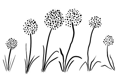 Alliums digital images file