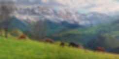 Pirineos 100x50.jpg