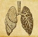 polmoni Sketch