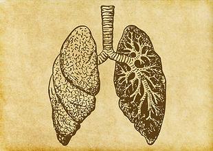 Boceto pulmones