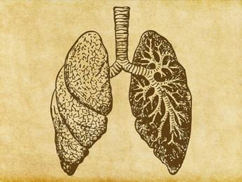 Pulmones a prueba de infecciones Los alimentos que te ayudan a fortalecerlos