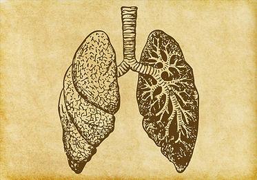 płuca Szkic