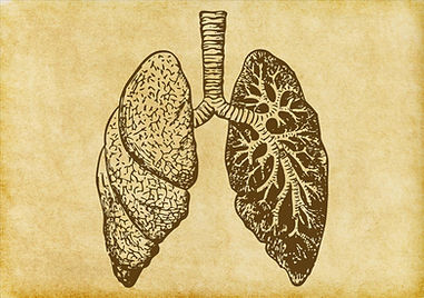 Lungs Sketch