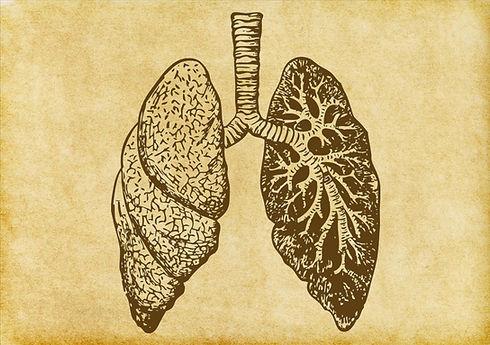Sketch poumons