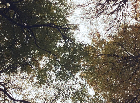 Ultimate Guide: Stunning Autumn iPhone Photos in 3 EASY Steps!