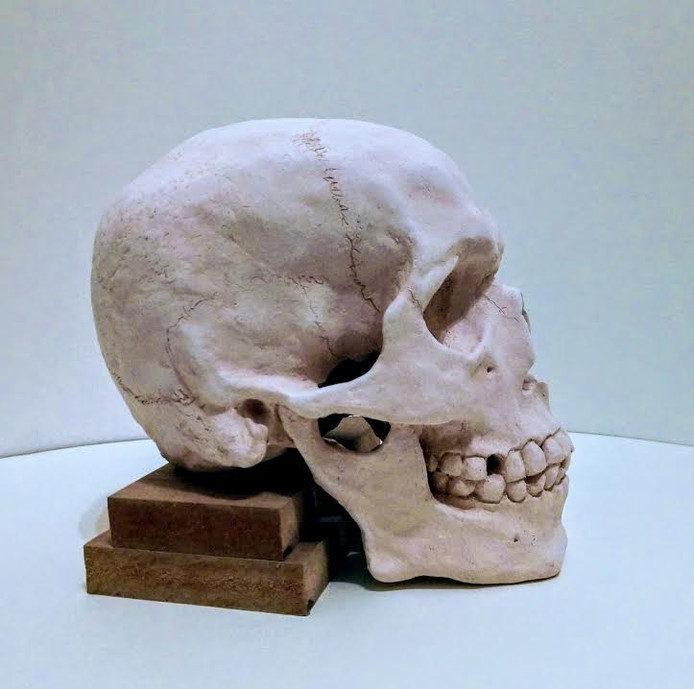 side view of bisqueware ceramic skull