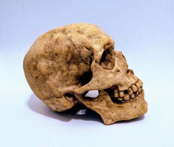 side view of life size ceramic skull
