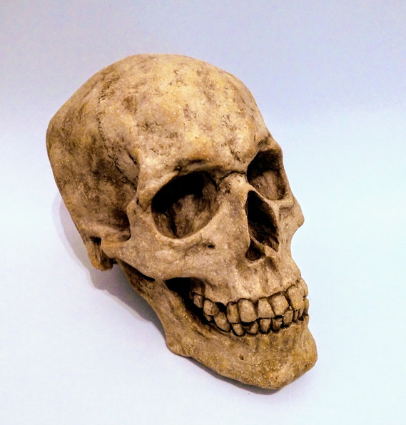 Life size ceramic skull