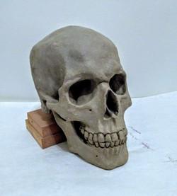 Life size clay skull