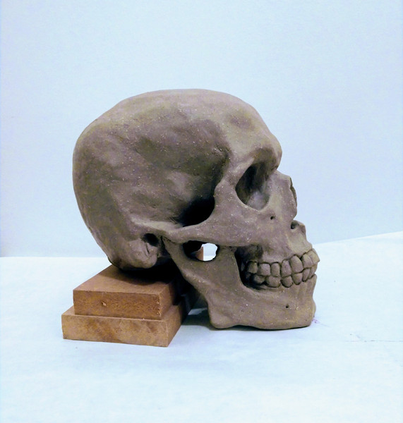 side view of clay version of skull