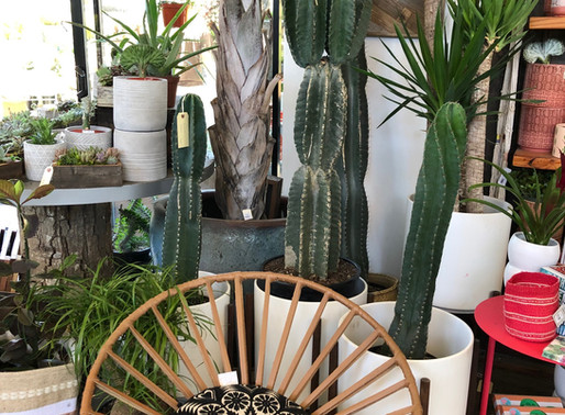 "Trend Alert- House Plants Create a Comforting ""Green Vibe"" and Make Potential Buyers Feel at Home"