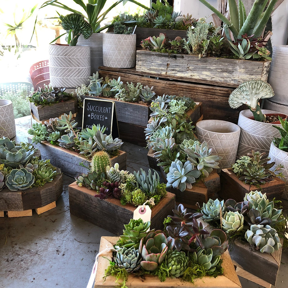 photo of beautiful succulents in reclaimed wood planters