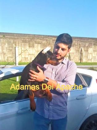 ADAMAS DEI APACHE