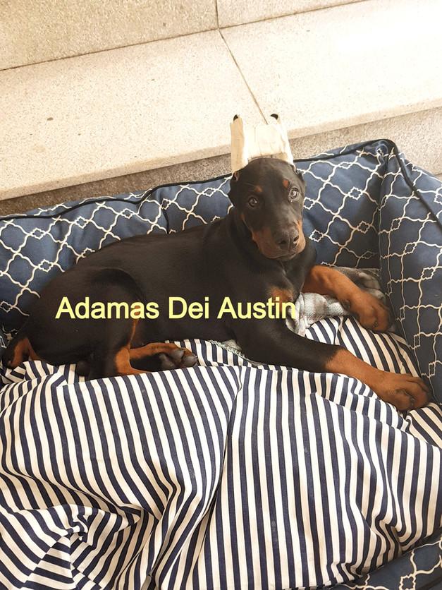 ADAMAS DEI AUSTIN