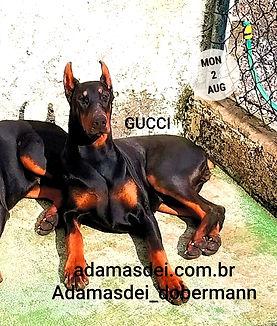 gucci_edited.jpg