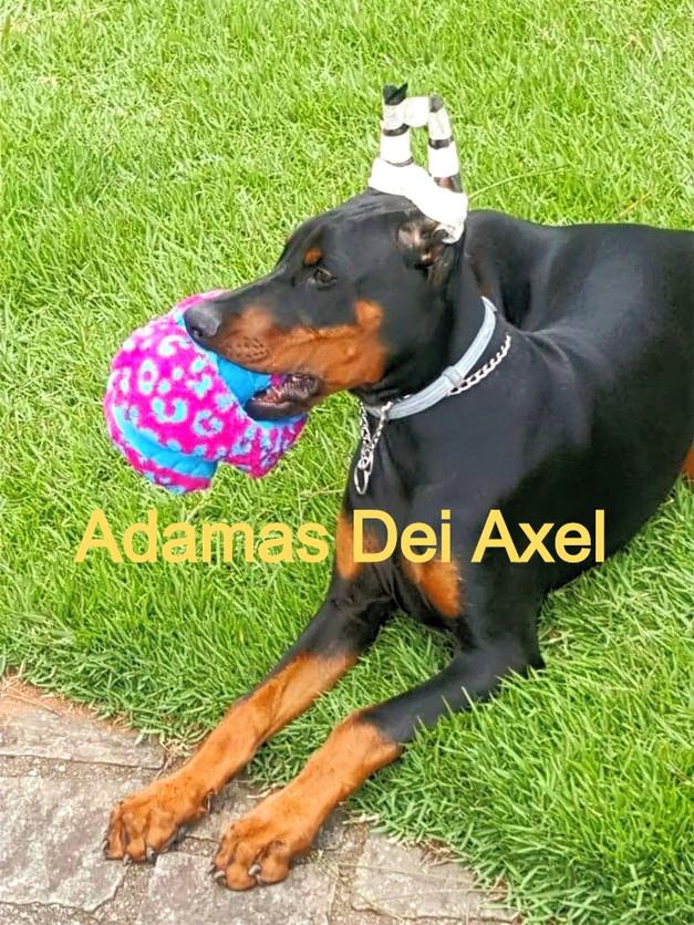 ADAMAS DEI AXEL