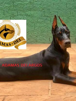 ADMAS DEI ARGOS