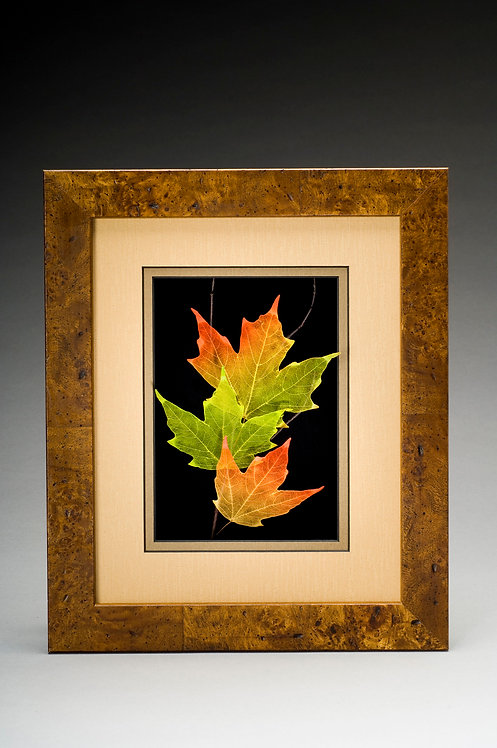 Sugar Maple- Brown- 104