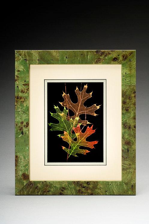 Scarlet Oak- green- 103