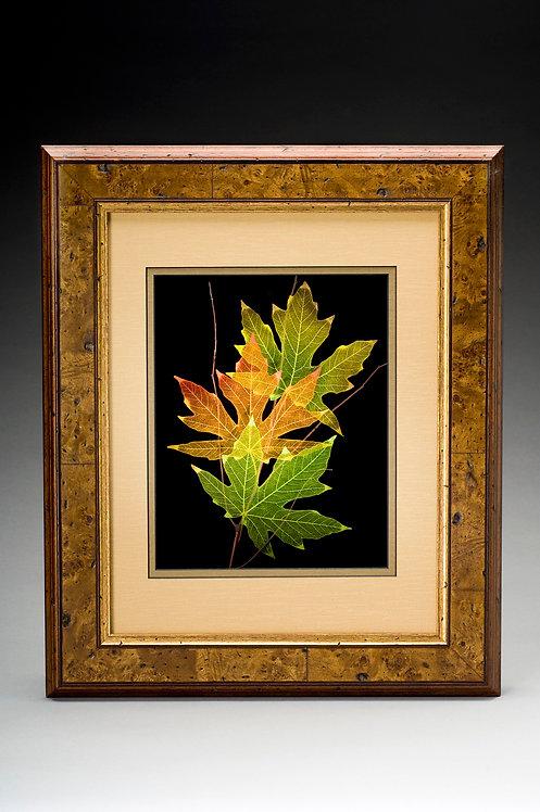Leaf Shadowbox-Maple- 100