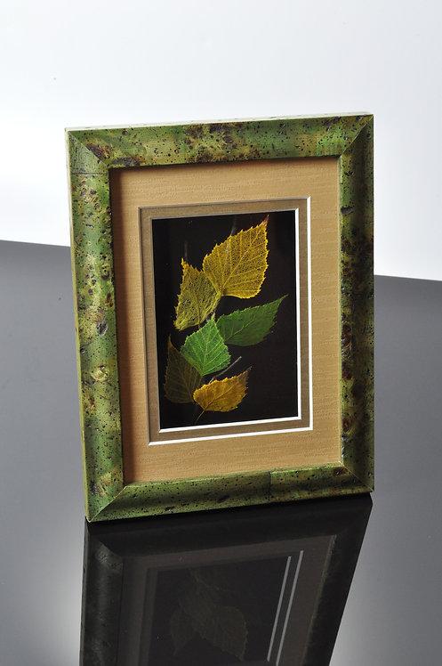Birch- green- 105