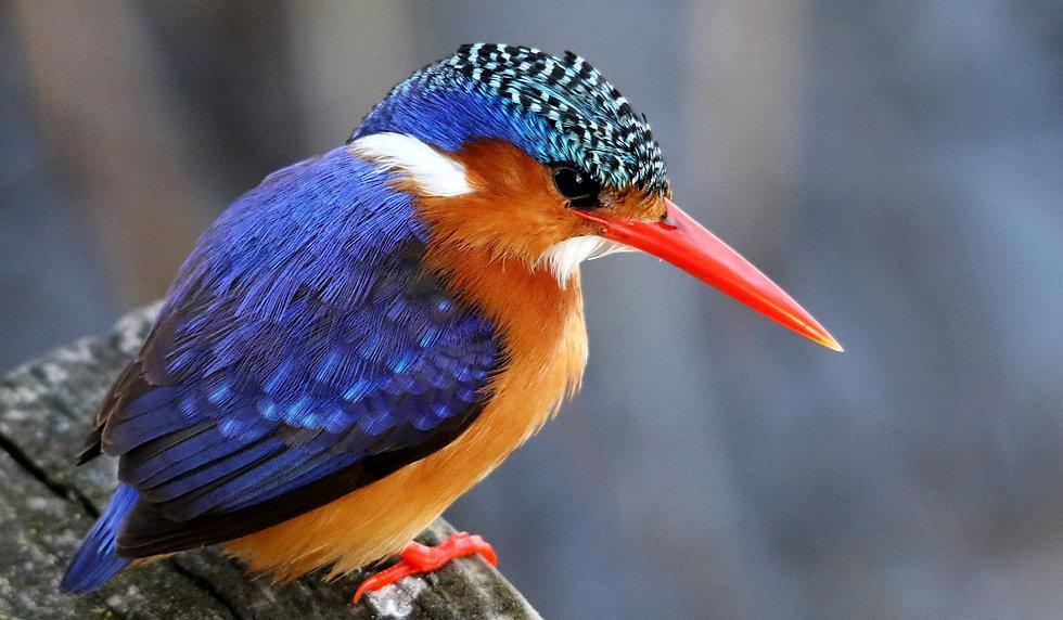 pixabay-bird-4580982_1920_edited.jpg