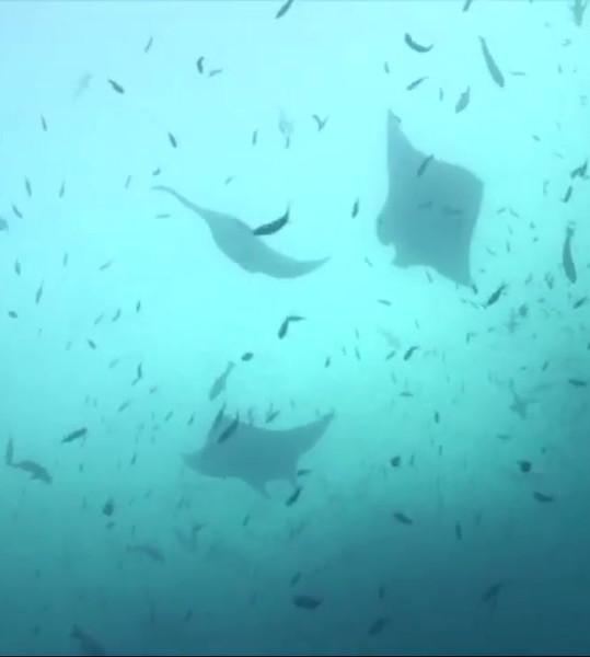 Palau 2018 w_ Jellyfish Lake-1280 video.mp4