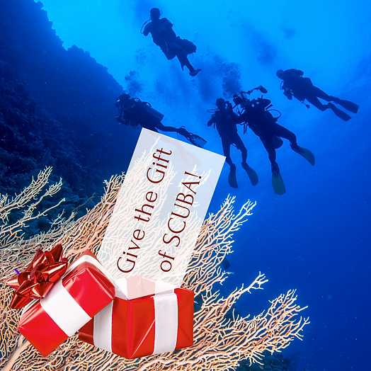 Graphic Give the Gift of SCUBA!.png