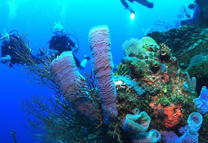 diving 2.jpeg