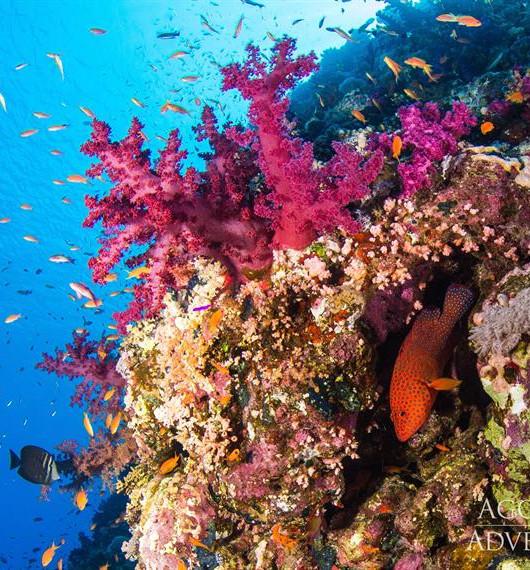 coral-reefw857h570crwidth857crheight570.