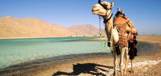 camel by water pic.jpeg