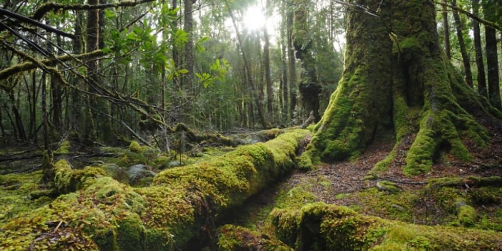 Earthbody Women's Retreat: Tasmania (Pallittorre Country)