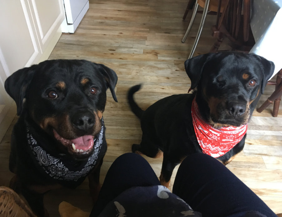 My two rottweiler rescue dogs