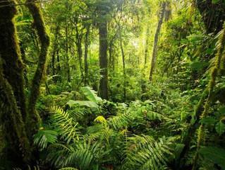 苏岛雨林梦