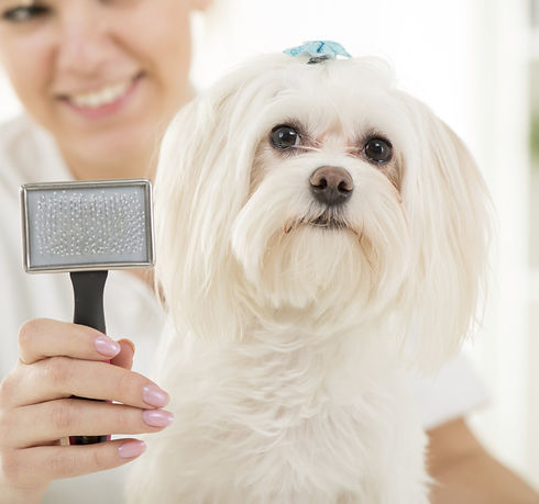 Dog Grooming_edited.jpg