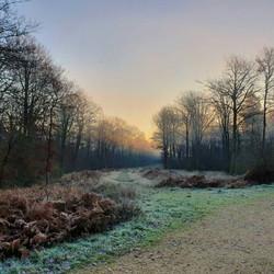 sunset-track-forest-winter.jpg