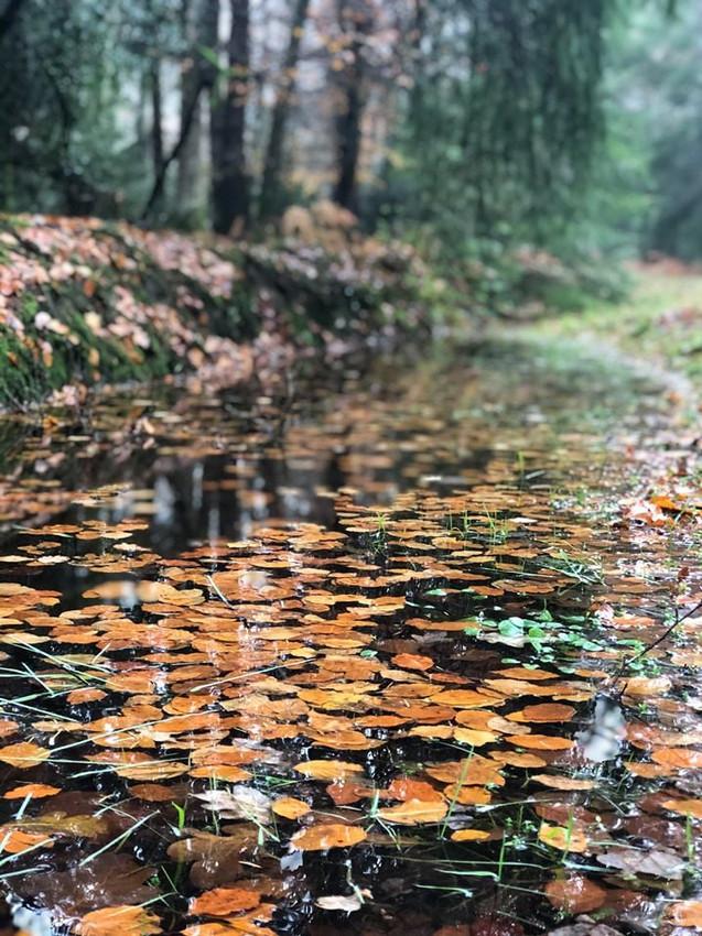 autumn-leaves-stream-trees.jpg