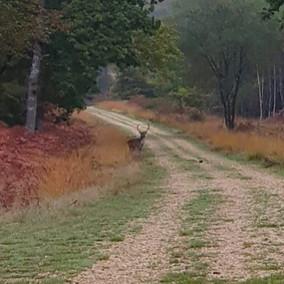 deer-trees-forest-track.jpg